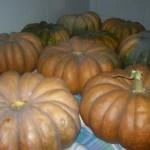 Agriturismo Nonna Cecilia: le nostre zucche