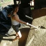 Agriturismo Nonna Cecilia: le nostre olive
