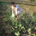 Agriturismo Nonna Cecilia: produzione nell'orto